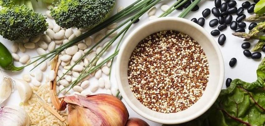 Plant based ingredients used in animal feed | Mr  Farmer